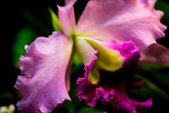 Orchid (Jordan Salkin) Tags: camera newyork orchid color macro nature colors photography photo petals amazing cool nikon focus scenery colorful pretty photographer purple orchids awesome small scenic like scene photographic follow petal rochester explore photograph micro mico likes photooftheday naturephotography followme 2016 naturephoto naturephotographer naturephotograph