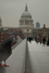 """""""What you lookin' at?"""" (phoebe.horner) Tags: city red bus london st speed canon buildings cityscape slow cathedral time pigeon pauls shutter lapse 400d"""