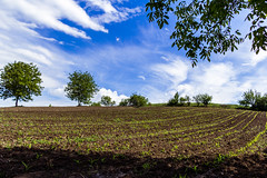 blajini natura-1898 (maritoieugeniu) Tags: flowers blue trees sky green fauna clouds landscape landscapes earth land agriculture cloudscapes moldova skyporn radeni