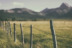 Remembering (Tracey Rennie) Tags: ranch mountains field grass rural fence rockies farmland alberta barbedwire rockymountains backroad goldenhour waterton