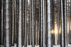 The best cure (Jay Daley) Tags: snow nikon australia nsw d810 sugarpineforest