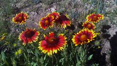 107 (jurinkof) Tags: fleurs blten   kvety kvty