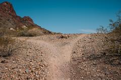 5R6K2958 (ATeshima) Tags: arizona nature havasu