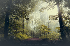 a day like this (Dyrk.Wyst) Tags: morning trees light summer dog mist nature leaves fog forest sunrise germany landscape deutschland licht buchenwald haze mood nebel sommer laub natur atmosphere hund mystical wuppertal landschaft wald bume sonnenaufgang stimmung morgens beechtrees outdooor