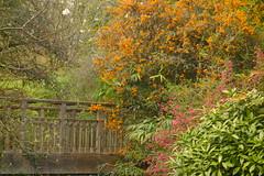 Berberis Bridge (Dave Roberts3) Tags: park flowers trees orange wales landscape newport bellevue gwent supershot citrit