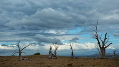 to appear to disappear (keith midson) Tags: trees sky clouds rural dry nile drought tasmania agriculture arid