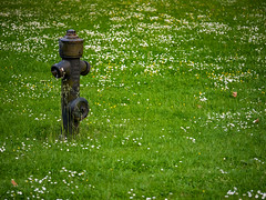 2016|06|03 (FotoGis) Tags: hydrant 365 daybyday project365 tagesfoto tagfrtag
