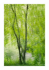 (Marissen) Tags: wood painterly blur tree texture multipleexposure impressionistic tripleexposure flypapertexture