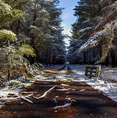 Norway - Australia Snow (Richard Sollorz Photography) Tags: panorama snow black west norway pine forest landscape outdoors gate day country central australia richard springs nsw bathurst oberon sollorz