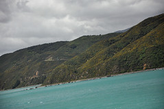 DSC_7435 [ps] - Steady Slump (Anyhoo) Tags: anyhoo photobyanyhoo newzealand portnicholson wellingtonharbour bluebridge ferry fromtheferry aotearoa sea water wave ripple blue shore coast rocks headland cliff rocky beach furze
