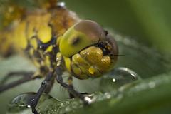 dragonfly (Aleoko) Tags: 15challengeswinner