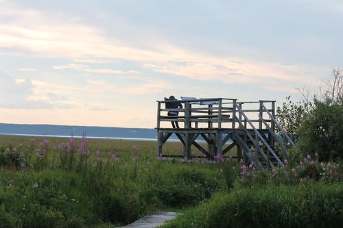 Bird observation platform