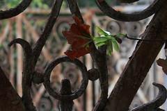 (Elbmaedchen) Tags: rost schnrkel gartentor ahorn rust abandoned
