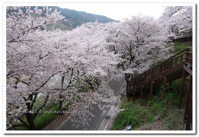 화개십리벚꽃길28