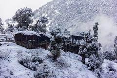 "Frozen !! (Sam Gupta Photography) Tags: white snow black ice nature monochrome canon photography frozen scenery natural plush serene soe canonindia canoneos60d ""flickraward"" canonefs18200mmis samguptaphotography"