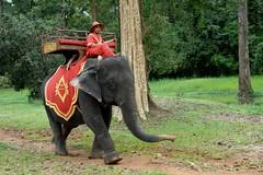 Elephant at Angkor Thom (Stone.Rome) Tags: elephant male asia cambodia thom driver angkor wat