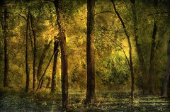 Evening Trees (Bigshot Photographer) Tags: artscape artcolor arttex kurtpeiserexcellence