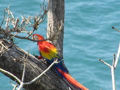 hula hoop sat 049 (Learn, Love, Conserve) Tags: hulahoop saprissa puntaleona feriaverdearanjuez