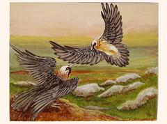 Lammergier (dog.happy.art) Tags: original bird art birds painting acrylic vultures vulture acrylics beardedvulture lammergier handpaintedl