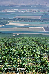 CALIFORNIA - View of Salinas Valley from vinyards that line the hillsides (Remsberg Photos) Tags: california usa green view wine farm farming salinas vineyards grapes crops agriculture salinasvalley hillsides