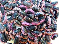 Scarlet runner beans (Sandy Austin) Tags: newzealand bean seeds northisland mygarden massey westauckland scarletrunner sandyaustin panasoniclumixdmcfz40