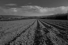 High climbs the summer sun , High stands the corn (Livesurfcams) Tags: boy lines countryside farm devon fields farmer xtc ploughed bridgemans remlap
