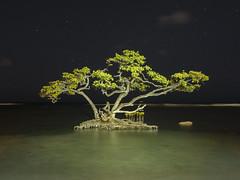 Mangle tree (GOJR.) Tags: longexposure tree time puertorico mangle lightpainted olympusomdem1 olympusmzuiko1250mmf3563ez