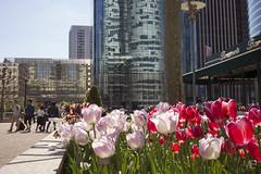 les tulipes LM+35 1002768 (mich53 - Thanks for 2700000 Views!) Tags: street flowers urban france building architecture bar spring reflets printemps brasserie ladfense urbain tulipes summiluxm35mmf14asph leicamtype240