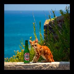 Cefal - Palermo (Massimo Frasson) Tags: italy italia mare sole palermo birra gatto animali oldcity sicilia vacanze centrostorico cefal villaggio pittoresco