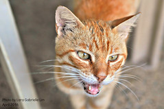 Cat (lakaira_echoes) Tags: cute animal cat focus whiskers meow