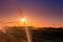 Golden Shower (Starline-Photography) Tags: sunset sun water landscape sonnenuntergang sundown landschaft sonne nrnberg gemse agrar frth knobluachsland