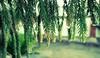 #raindrops #monsoon #greenleafs #vaibhavphotography (vaibhavchoudhary708) Tags: monsoon raindrops greenleafs vaibhavphotography