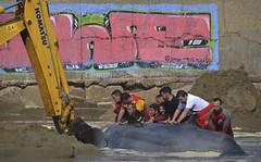 Stop toys, please (Dechucho) Tags: espaa rescue beach andaluca huelva playa whale komatsu ballena ayamonte cruzroja salvamento
