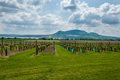 Plava vineyards (The Adventurous Eye) Tags: landscape reserve biosphere unesco area protected plava oblast chko krajinn chrnn