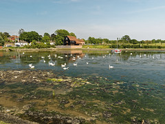 Swans at Fareham creek (martin_swatton) Tags: creek olympus hampshire swans pro 28 omd fareham em1 1240 ukwater mzuiko