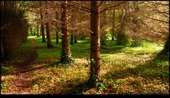 160510-7993-XM1.jpg (hopeless128) Tags: trees france woods eurotrip fr 2016 nanteuilenvalle aquitainelimousinpoitoucharentes aquitainelimousinpoitoucharen