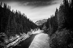 Cascade River B&W (jeremyrebeccacarter) Tags: trees blackandwhite clouds river alpine nationalparks banffnationalpark cascaderiver silverefex