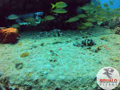 Scuba Diving-Miami, FL-Jun 2016-20 (Squalo Divers) Tags: usa divers florida miami scuba diving padi ssi squalo divessi