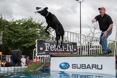 GY8A8520.jpg (BP3811) Tags: dog water pool virginia jump ultimate air teeth richmond subaru jaws toss leap fetch throw riverrock dominion retrieve fetchit