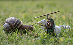 Perspective (Martzimages) Tags: macro martzimages snail horse knight