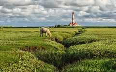 The Lighthouse guard (Stefan Sellmer) Tags: sky lighthouse green water clouds germany sheep natural walk natur schleswigholstein westerhever