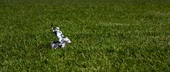 Wide Open Range (aaron.kudja) Tags: toy star cow stormtrooper wars revoltech