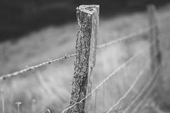 IMG_1806 (RL Mulholland) Tags: hff fence 50mm f18