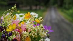 Happy Midsummer! (Blackpepper eye) Tags: flowers summer midsummer midsommar midsummereve midsommarafton