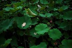 _14 (Taiwan's Riccardo) Tags: ltm color digital taiwan rangefinder botanicalgarden  l39  colorskopar 2016 28mmf35 sonyccd voigtlanderlens epsonrd1x