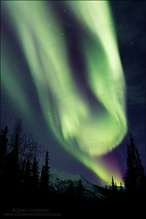 Aurora Borealis above spruce and mountain (vertical) (Greg Schneider (gschneiderphoto.com)) Tags: auroraborealis blue green gschneiderphotocom mountain night northernlights red spruce trees vertical winter usa