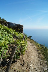 Vineyards of Italy (DaRo94) Tags: blue light sea italy mountains bay wine hiking trail terre monterosso cinque