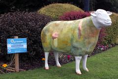 Mathilde (Cumberland Patriot) Tags: hotel swan sheep outdoor painted go cumbria trust ambleside macdonald calvert mathilde ewe cumbrian herdwick goherdwick