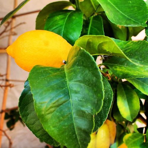 Lemon Sunday