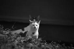 stray cats (zbackkcabz) Tags: trees blackandwhite sunlight cute nature beautiful animal cat mono amazing cool bokeh awesome country scene bnw straycat